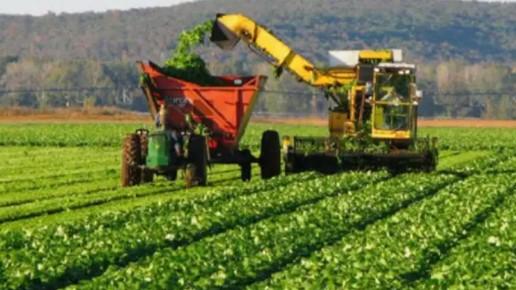 Agricultura secano Uruguay