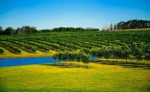 Agricultura Uruguay